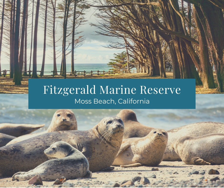 The-Fitzgerald-Marine-Reserve-is-located-just-20-miles-south.xx&oh=f73aa824599e75632c22d9c40cede886&oe=5E8FE3A6.jpeg